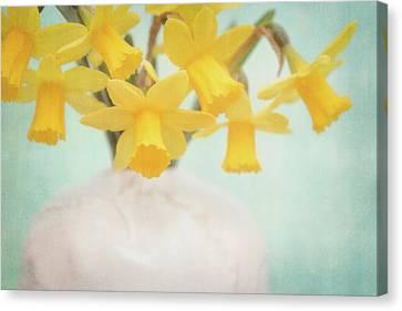 Daffodils Canvas Print by Cora Niele