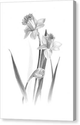 Daffodils Canvas Print by Diane Cardaci