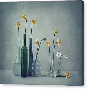 Flask Canvas Print - Daffodils by Dimitar Lazarov -