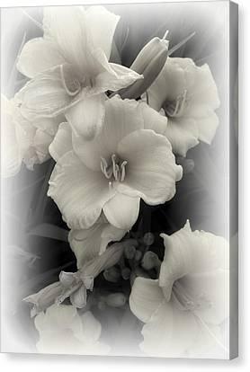 Daffodils Emerge Canvas Print by Daniel Hagerman
