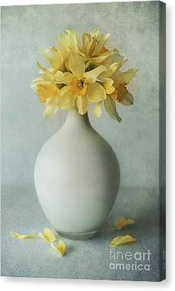 Daffodils In A White Flowerpot Canvas Print