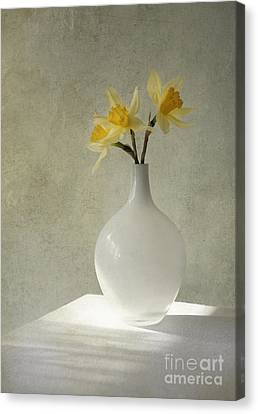 Indoor Still Life Canvas Print - Daffodils In White Glass Flower Pot by Jaroslaw Blaminsky