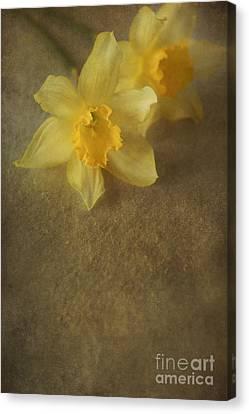 Indoor Still Life Canvas Print - Daffodils  by Jaroslaw Blaminsky