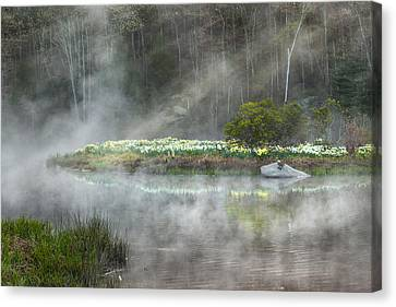 Daffodils Of The Fog Canvas Print by Bill Wakeley