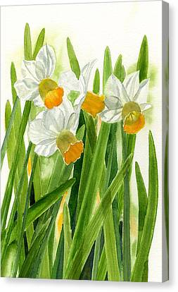 Daffodils With Green Leaves Canvas Print by Sharon Freeman