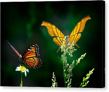 Daggerwing And Monarch Canvas Print by Mark Andrew Thomas