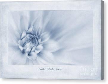 Flora Canvas Print - Dahlia 'abridge Natalie' Cyanotype by John Edwards