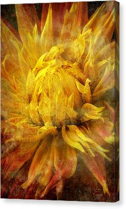 Dahlia Abstract Canvas Print by Garry Gay