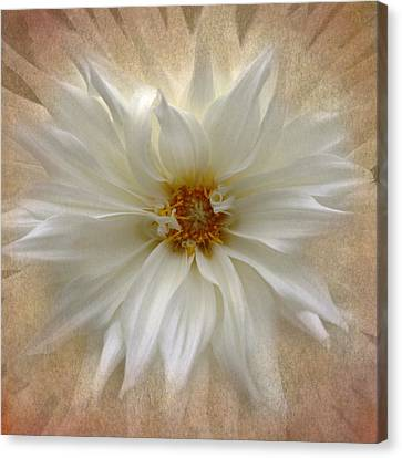 Large White Flower Canvas Print - Dahlia Burst by Angie Vogel