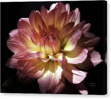 Dahlia Burst Of Pink And Yellow Canvas Print by Julie Palencia