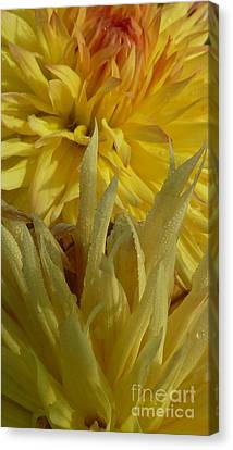 Canvas Print featuring the photograph Dahlia Dew Yellow by Susan Garren
