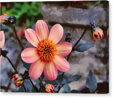 Dahlia First Love Canvas Print by Paul Gulliver