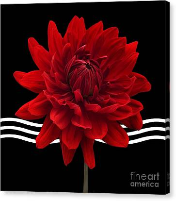 Dahlia Flower And Wavy Lines Triptych Canvas 2 - Red Canvas Print by Natalie Kinnear