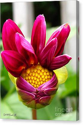 Canvas Print featuring the photograph Dahlia From The Showpiece Mix by J McCombie