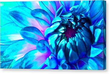Dahlia In Pastel Canvas Print by James Hammen