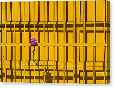 Dahlia In Yellow Gate Canvas Print by Garry Gay
