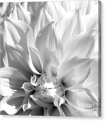 Dahlia Canvas Print by Jan Cipolla
