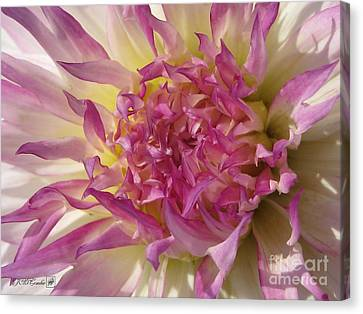 Canvas Print featuring the photograph Dahlia Named Angela Dodi by J McCombie