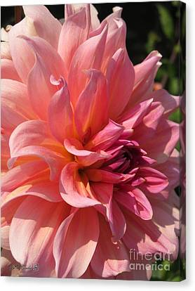 Canvas Print featuring the photograph Dahlia Named Fire Magic by J McCombie