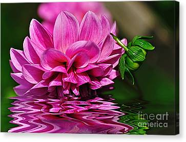Dahlia On Water Canvas Print by Kaye Menner