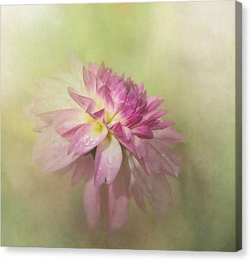 Dahlia Refreshed Canvas Print