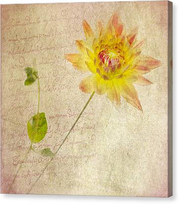 Dahlia Squared With Prose Canvas Print