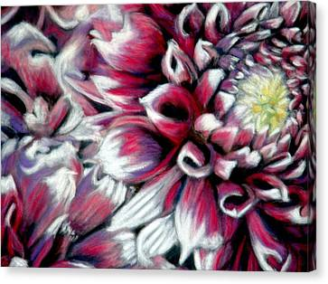 Dahlias In Pastel Canvas Print
