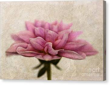 Dahlietta Amy Textured Canvas Print