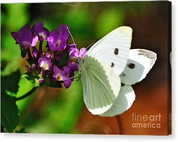 Dainty Butterfly Canvas Print