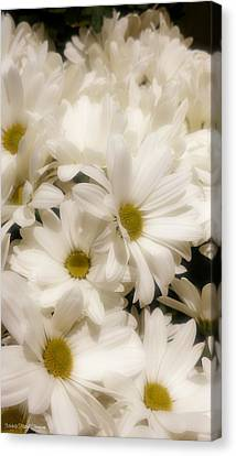 Dainty Daisy  Canvas Print by Michelle Frizzell-Thompson