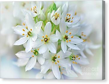 Dainty Spring Blossoms Canvas Print by Kaye Menner