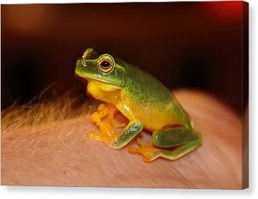 Dainty Tree Frog  Canvas Print