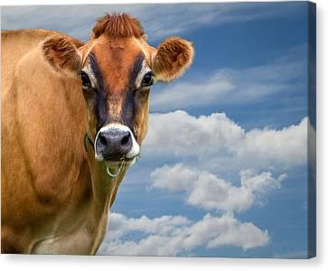 Bovine Canvas Print - Dairy Cow  Bessy by Bob Orsillo