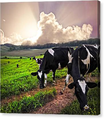 Dairy Cows At Sunset Canvas Print by Debra and Dave Vanderlaan