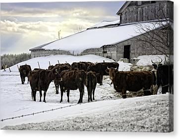 Dairy Farm Canvas Print