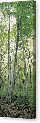 Forest Floor Canvas Print - Daisen Tottori Japan by Panoramic Images
