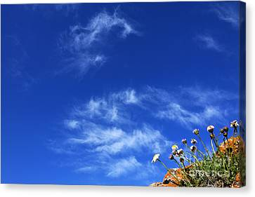 Kyrgyzstan Canvas Print - Daises Growing In A Crack Of Red Rock In Kyrgyzstan by Robert Preston
