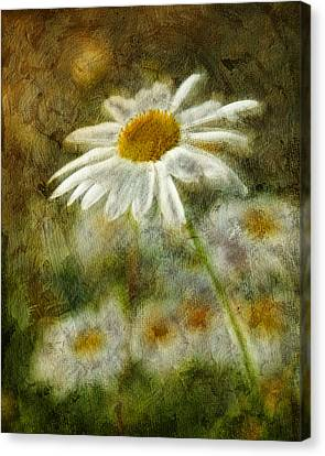 Daisies ... Again - P11at01 Canvas Print by Variance Collections