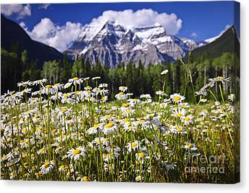 Daisies At Mount Robson Canvas Print by Elena Elisseeva