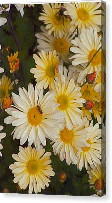 Daisies Canvas Print by Barb Baker