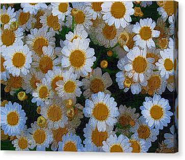 Canvas Print featuring the photograph Daisies by Diane Miller
