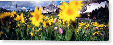 Daisies, Flowers, Field, Mountain Canvas Print by Panoramic Images