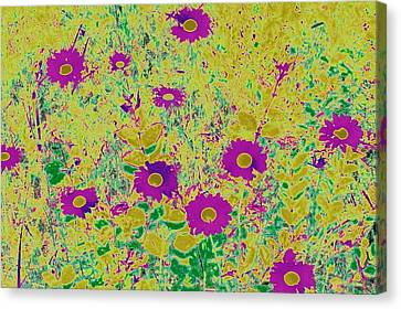 Daisies I Canvas Print by Shirley Moravec