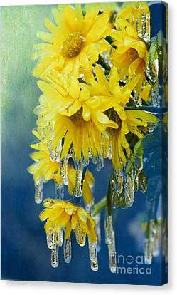 Daisies In Ice Canvas Print by Betty LaRue