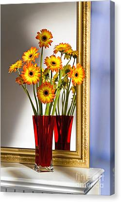 Daisies In Red Vase Canvas Print by Tony Cordoza