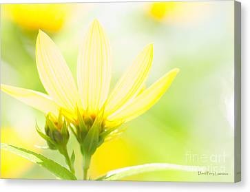 Daisies In The Sun Canvas Print