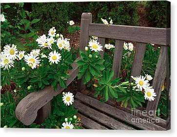 Daisies On The Bench Canvas Print by John Rizzuto
