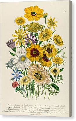 Daisy Canvas Print - Daisies by Jane Loudon