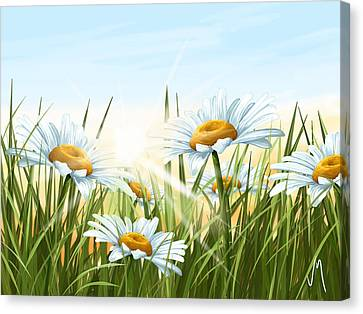Daisies Canvas Print by Veronica Minozzi