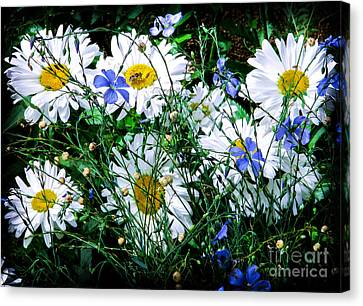 Daisies With Blue Flax And Bee Canvas Print